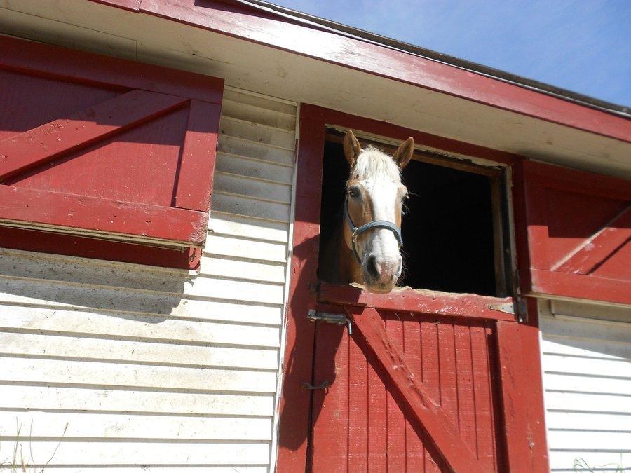 paardenstal-02.jpg